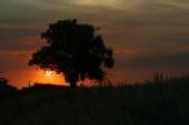 Brad Booth - Sunset