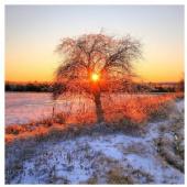 DennisChunga - Burning Tree