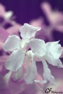 duduls - false color