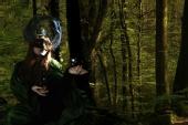 Night Phoenix - Forest Magic