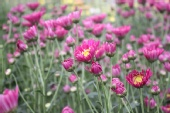 xROBIx - beautiful flower