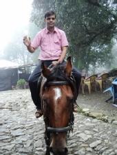 ajay - horse