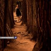 Aeron Nersoya - Step into Wonderland